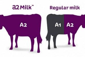 about-a2-milk-1400x595 (1)